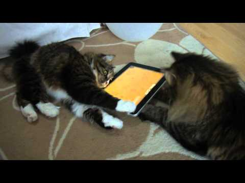 "Cats playing ""Game for Cats"" with Apple iPad"