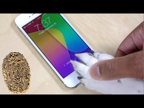 iPhone 5s Touch ID: What You Should Know (Human/Dog Demo)